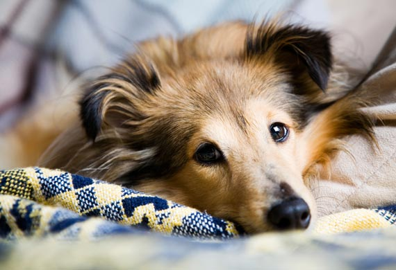 Fourth of July Pet Safety Tips | Fireworks and Dogs | Thunderstorms and Dogs | petMD
